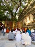 Séance de méditation devant le Bodhi sacré sur le site du temple Mahabodhi, Bodh Gaya, Inde.