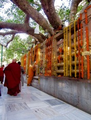 Un moine se recueille devant le Bodhi sacré sous lequel Lord Bouddha a reçu l'illumination. Temple Mahabodhi, Bodh Gaya, Inde.