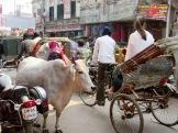 Circuler dans les rues de Varanasi près du vieux quartier Chowk est toute une aventure, Inde.
