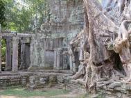 La nature reprend ses droits à Preah Khan, Siem Reap, Cambodge.