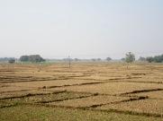 Le paysage rural défile le long de la voie ferrée entre Varanasi et Bodh Gaya. Inde.