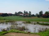 Les maisons sur pilotis sont souvent regroupées autour d'une rizière ou d'un potager.
