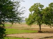 Paysage rural entre Varanasi et Bodh Gaya, Inde.