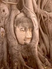 Cette tête de Bouddha prise dans les racines d'un arbre au Wat Maha That est probablement l'une des plus photographiée de tout Ayutthaya, Thaïlande.